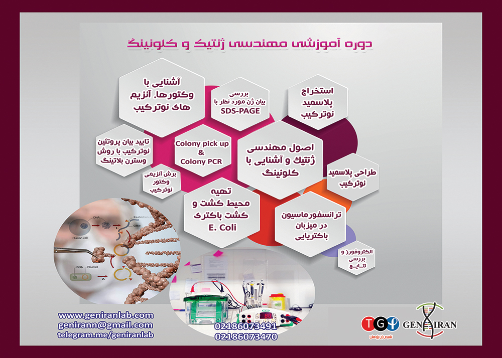 دوره کارآموزی مهندسی ژنتیک و کلونینگ | آموزش کلون کردن | SDS PAGE