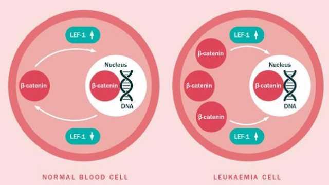 محققان مکانیسمی که سلول های خون رشد می کنند را کشف کردند