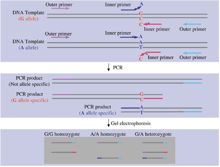 تکنیک ARMS و Tetra-ARMS PCR