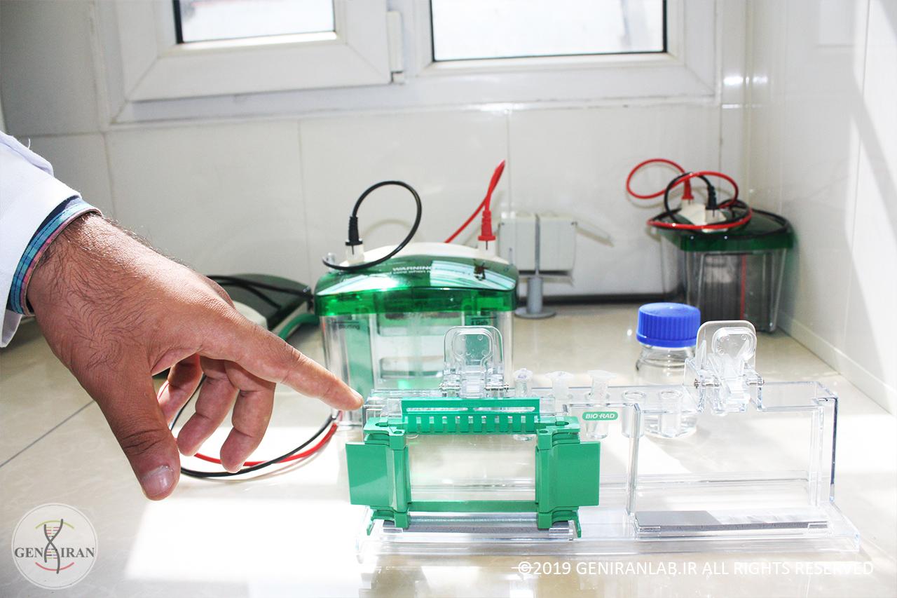 کارآموزی مهندسی ژنتیک و کلونینگ