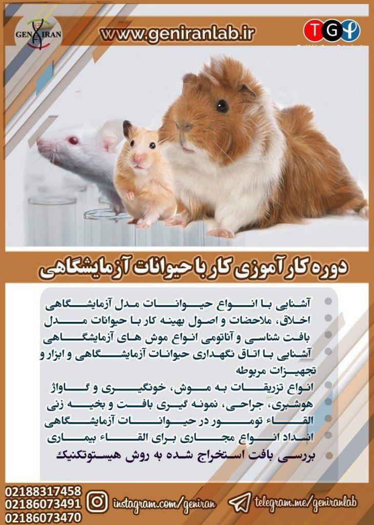 کارآموزی کار با حیوانات آزمایشگاهی