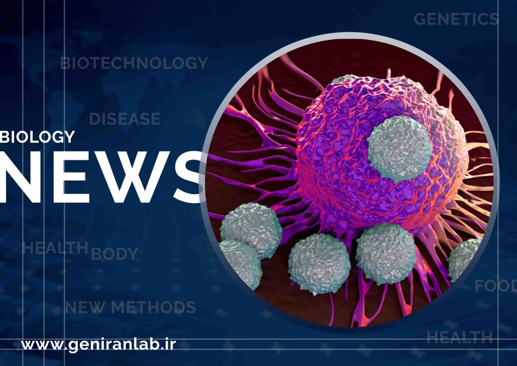 سلولهای T با افزایش تولید پروتئین خود می توانند به قاتلان بهتری برای سرطان تبدیل شوند