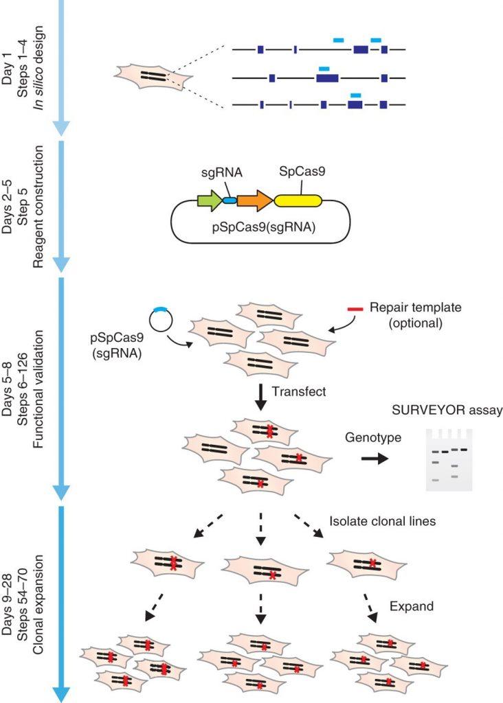 CRISPR-case9 چیست؟